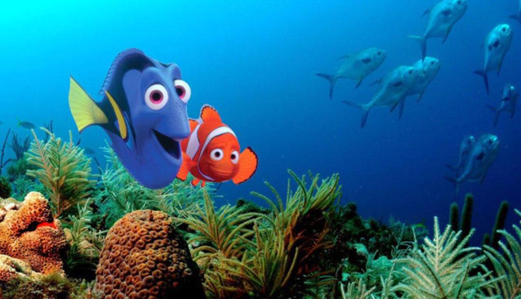 Nemo chogori 2 review