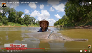 We see a guy holding a huge fish in a river before releasing it.